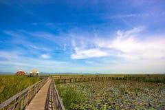 лотос озера цветка Стоковое Фото