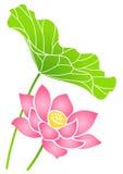 лотос цветка Стоковая Фотография RF