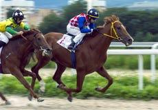 Лошадиные скачки для приза Ogranichitelni в Pyatigorsk Стоковое Изображение