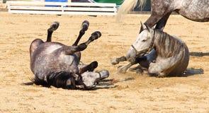 лошади арены Стоковая Фотография