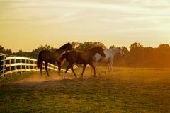 3 лошади бегут на луге стоковое изображение