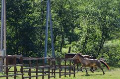 2 лошади бежать в ферме стоковая фотография