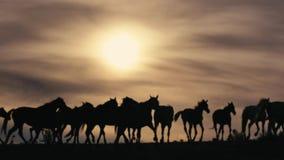 Лошади бежать на поле травы