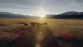 Лошади бежать свободно в луге со снегом покрыли фон горы видеоматериал