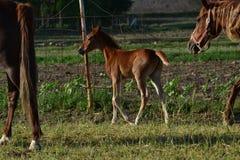 Лошади благородное и очаровательное полезное животное Стоковая Фотография RF