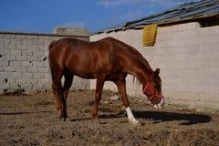 Лошади благородное и очаровательное полезное животное Стоковая Фотография