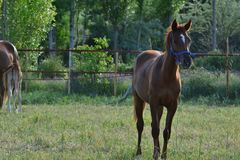 Лошади благородное и очаровательное полезное животное Стоковые Фотографии RF