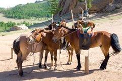 лошади вывешивают привязывать Стоковое Изображение RF