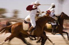 лошади выставки Стоковые Изображения