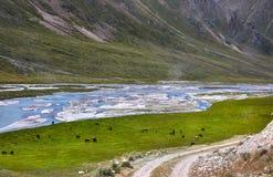Лошади в долине горы стоковое фото