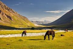 Лошади в долине горы стоковые фото