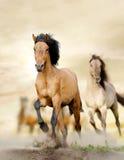 Лошади в заходе солнца стоковая фотография