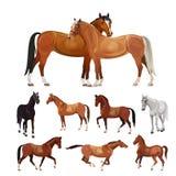 Лошади в различных представлениях иллюстрация вектора