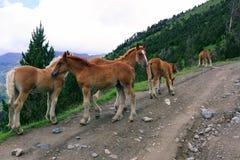 Лошади в свободе стоковое фото