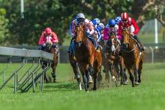 Лошади гонки бежать поднимающее вверх следа близкое стоковые фото
