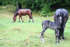 Лошади горы Стоковая Фотография RF