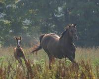 лошади делая поворот Стоковая Фотография