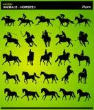 лошади животных i Стоковое Изображение