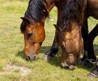 лошади замока старые Стоковые Изображения RF