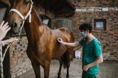 Лошади и ветеринарная работа стоковое фото