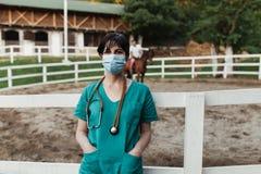 Лошади и ветеринарная работа стоковое изображение