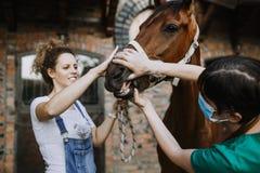 Лошади и ветеринарная работа стоковое изображение rf