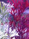 Лошади и коралл моря в аквариуме стоковое фото rf