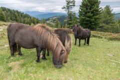 Лошади и пони на paddock, Австрия Стоковая Фотография