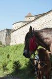 Лошади и средневековая архитектура стоковое фото