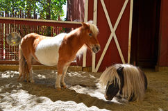 лошади миниатюрные стоковые фотографии rf