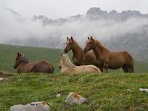 Лошади на горе стоковая фотография