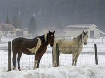 2 лошади на день ` s зимы стоковое фото rf