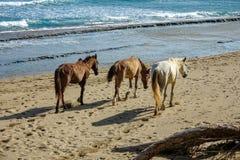 Лошади на пляже Стоковая Фотография