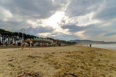 Лошади на пляже Samil - Виго стоковые фотографии rf