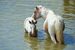 Лошади на пруде Стоковые Изображения