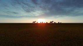 Лошади пасут в лугах в заходе солнца акции видеоматериалы