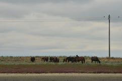 Лошади пася в одичалом Стоковое фото RF