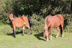 Лошади пася стоковые фотографии rf