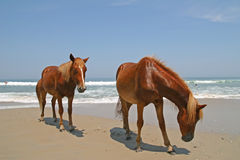 лошади пляжа Стоковые Изображения RF