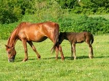 лошади поля