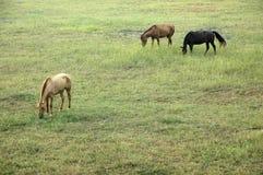 лошади поля Стоковое Фото