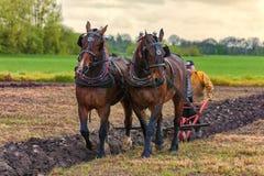 Лошади проекта вспахивая поле Стоковые Фото
