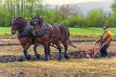 Лошади проекта вытягивая плужок направленный человеком Стоковая Фотография RF