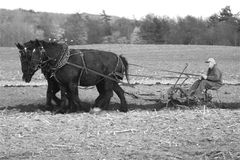 лошади проекта Стоковая Фотография RF