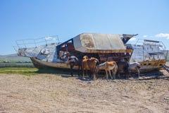 Лошади прячут от жары стоковое фото rf