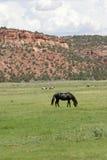 лошади раскрывают ряд Стоковое Изображение