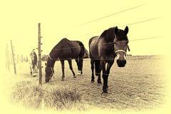 Лошади рассматривая загородка стоковые фотографии rf