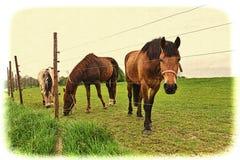 Лошади рассматривая загородка стоковое изображение rf