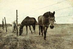 Лошади рассматривая загородка стоковое фото