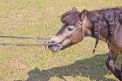 лошади сада карлика Стоковое Изображение RF